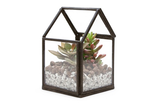house terrarium_mini_2